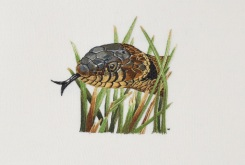 Grass snake embroidery