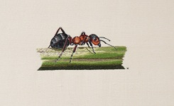 Hand embroidered wood ant