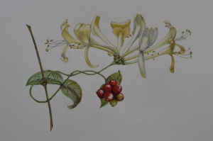 Honeysuckle painting rs