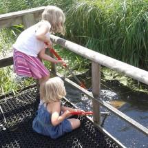 Pond dipping at Magor Marsh