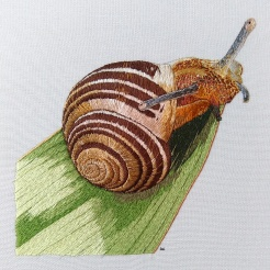 Brown lipped snail