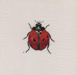 Ladybird final rs 2